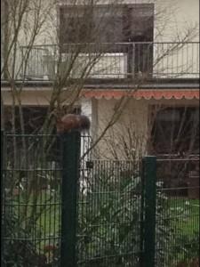 Eichhörnchen3a